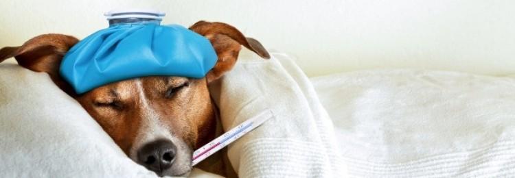Диета для собаки больной раком