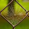 Можно ли убирать паутину в доме?
