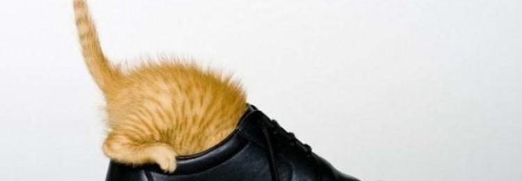 Как вывести запах кошачьей мочи из обуви