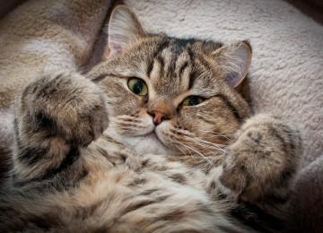 Необычные факты о домашних животных