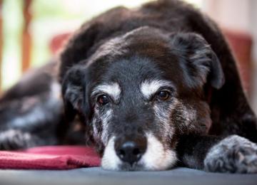 Уход за старыми животными: советы ветеринаров