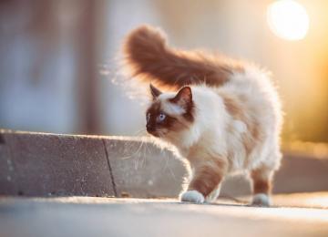 Как коты продлевают жизнь своим хозяевам?