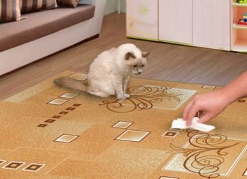 Как вывести запах кошачьей мочи с ковра