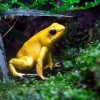 5 самых маленьких лягушек в мире