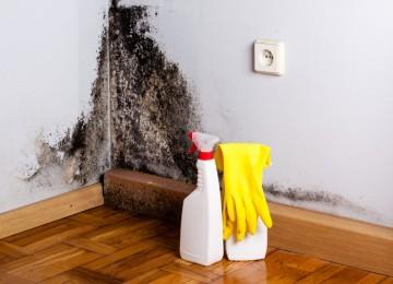Самые эффективные и безопасные методы избавления квартиры от плесени