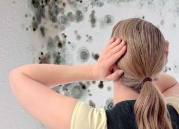 Средство против плесени и грибка — рейтинг ТОП-7 лучших