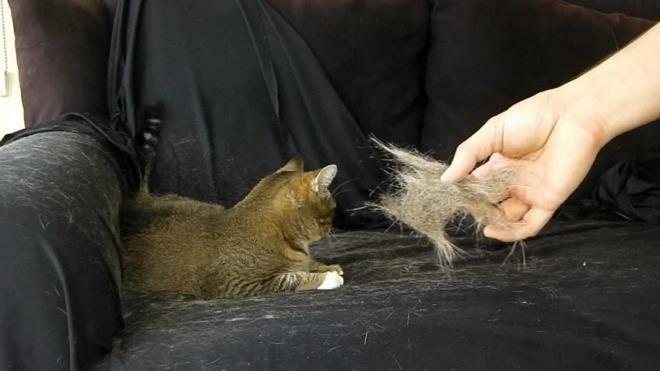 Избавляемся от шерсти животных с одежды