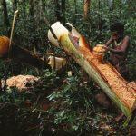 Колуфо – странное племя, живущее на высоте выше 10 м