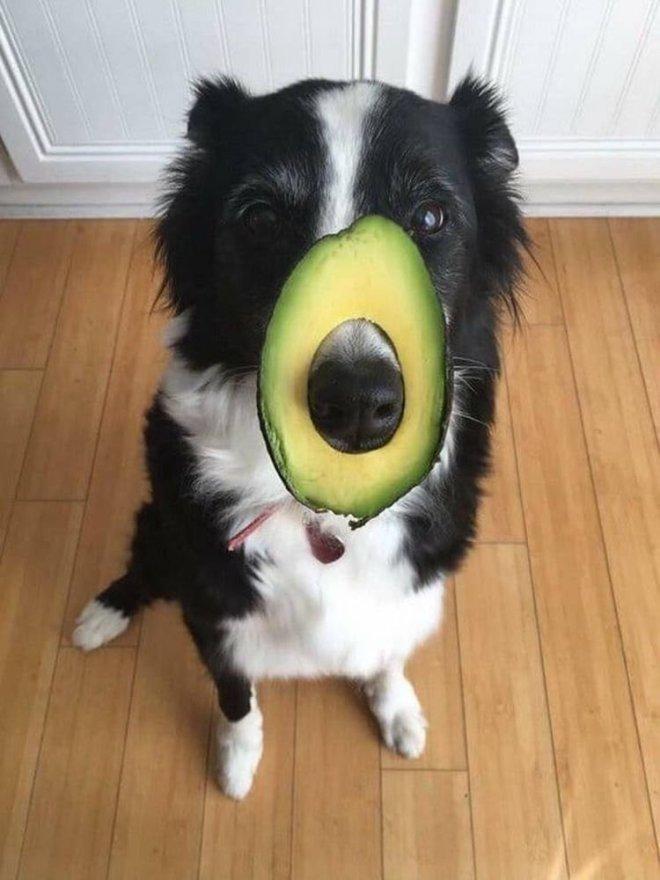 Могут ли собаки есть фрукты?