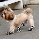 Как сшить обувь для собак своими руками