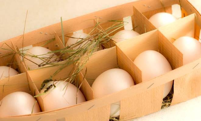 Как хранить яйца без холодильника