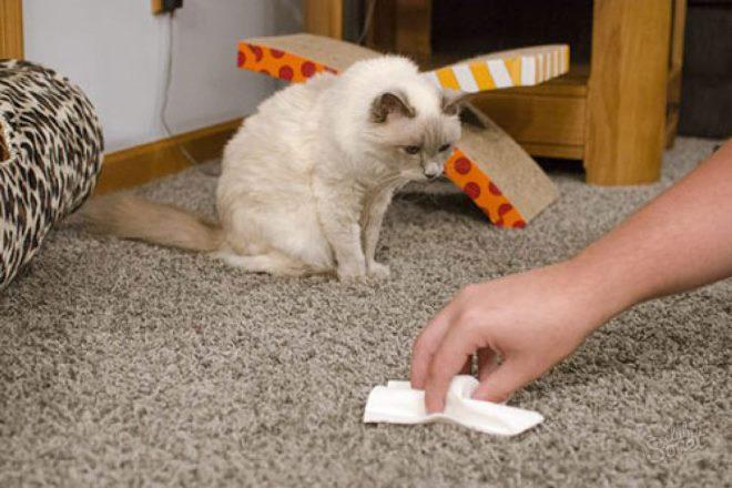 Как очистить ковер от запаха