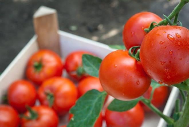 Как хранить помидоры в домашних условиях
