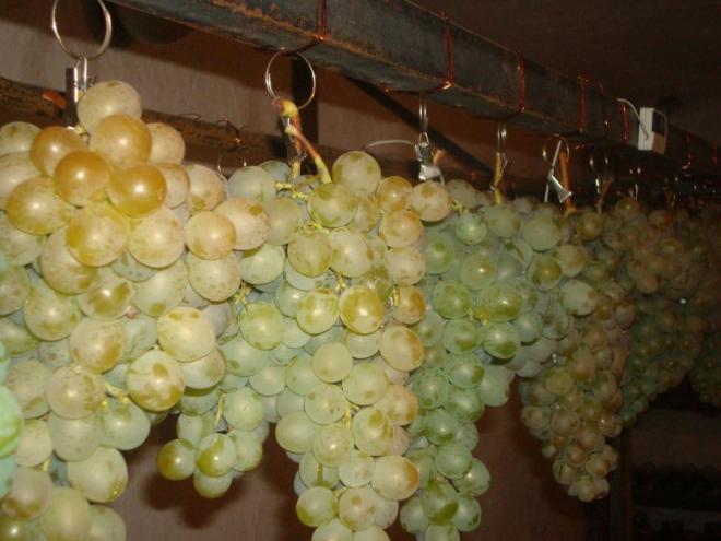 Как хранить виноград в домашних условиях