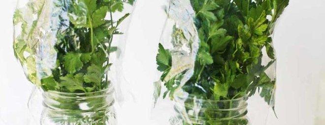 kak-hranit-zelen-v-holodilnike-1